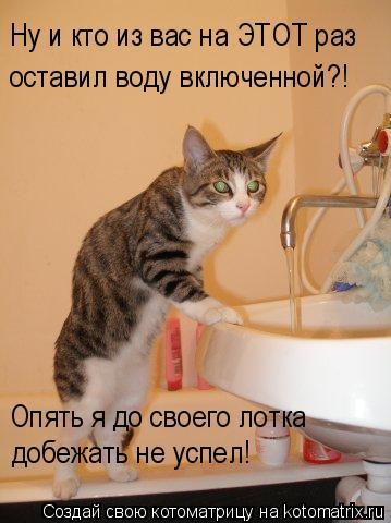 Котоматрица: Ну и кто из вас на ЭТОТ раз  оставил воду включенной?! добежать не успел! Опять я до своего лотка