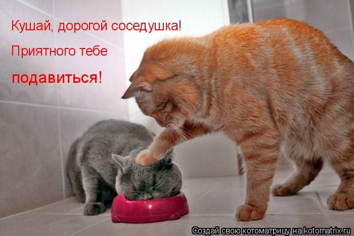 Котоматрица: Кушай, дорогой соседушка! Приятного тебе подавиться!