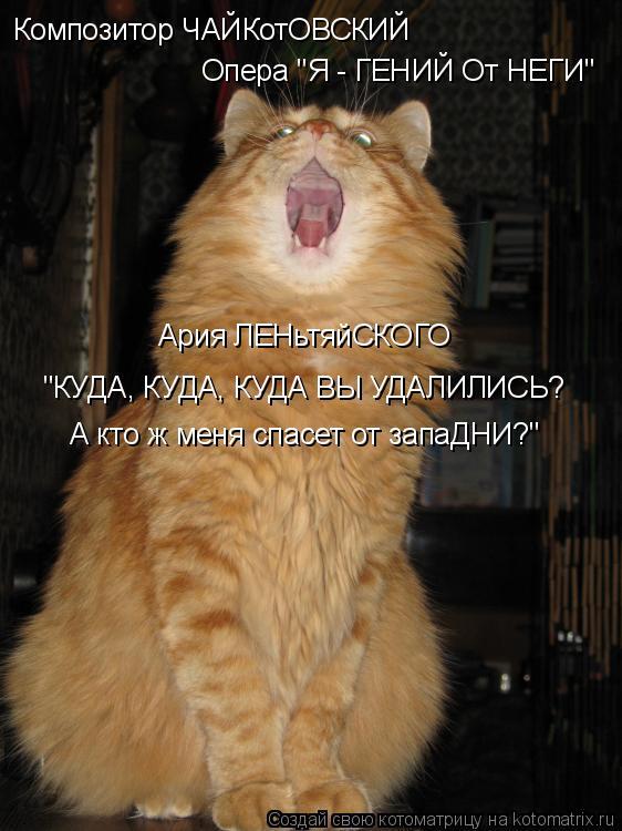 """Котоматрица: Композитор ЧАЙКотОВСКИЙ Опера """"Я - ГЕНИЙ От НЕГИ"""" Ария ЛЕНьтяйСКОГО """"КУДА, КУДА, КУДА ВЫ УДАЛИЛИСЬ? А кто ж меня спасет от запаДНИ?"""""""