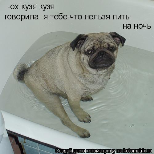 Котоматрица: -ох кузя кузя говорила  я тебе что нельзя пить  на ночь