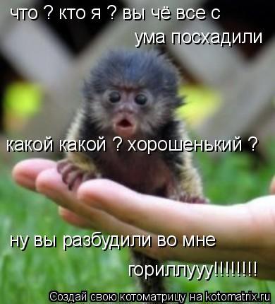 Котоматрица: что ? кто я ? вы чё все с   ума посхадили какой какой ? хорошенький ?  ну вы разбудили во мне  гориллууу!!!!!!!!
