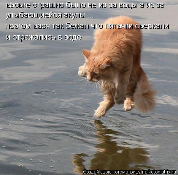 Котоматрица: ваське страшно было не из за воды а из за  улыбающиейся акулы ... поэтом вася так бежал что пятачки сверкали  и отражались в воде