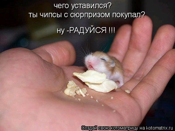 чего уставился? ты чипсы с сюрпризом покупал? ну -РАДУЙСЯ !!!