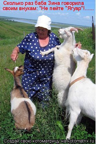 "Котоматрица: Сколько раз баба Зина говорила  своим внукам: ""Не пейте ""Ягуар""!......"