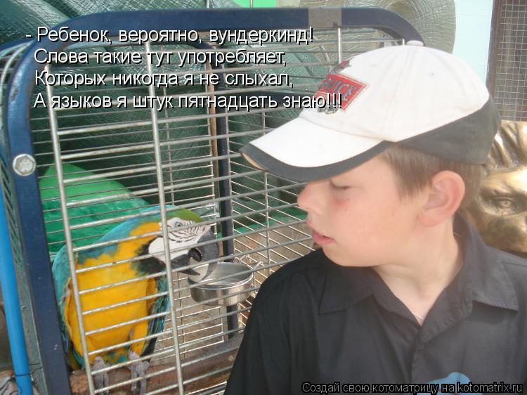 Котоматрица: - Ребенок, вероятно, вундеркинд!  Слова такие тут употребляет,  Которых никогда я не слыхал,  А языков я штук пятнадцать знаю!!!