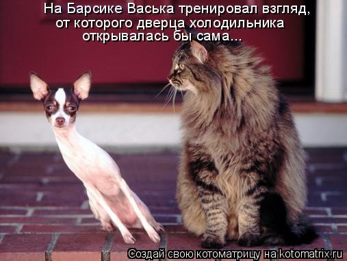 Котоматрица: На Барсике Васька тренировал взгляд,  от которого дверца холодильника открывалась бы сама...