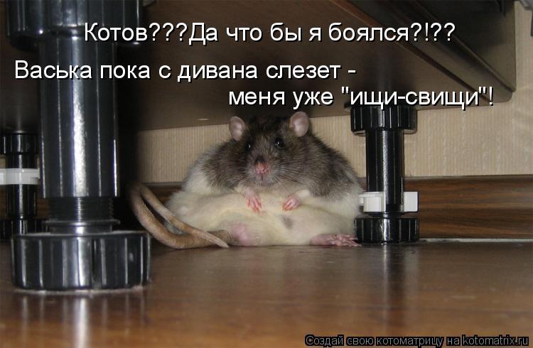 """Котоматрица: Котов???Да что бы я боялся?!?? Васька пока с дивана слезет - меня уже """"ищи-свищи""""!"""