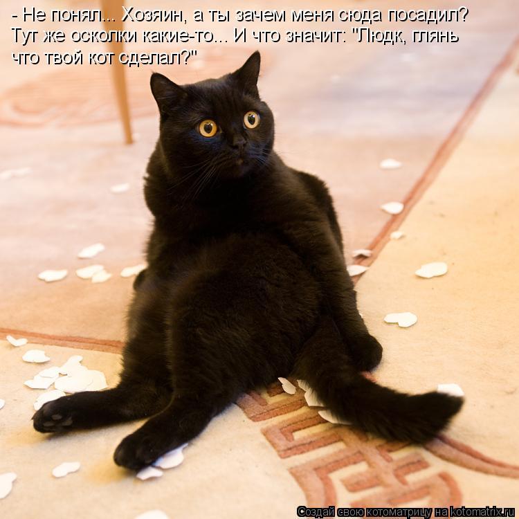 """- Не понял... Хозяин, а ты зачем меня сюда посадил? Тут же осколки какие-то... И что значит: """"Людк, глянь что твой кот сделал?"""""""
