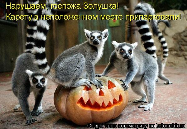 http://kotomatrix.ru/images/lolz/2010/09/02/668664.jpg