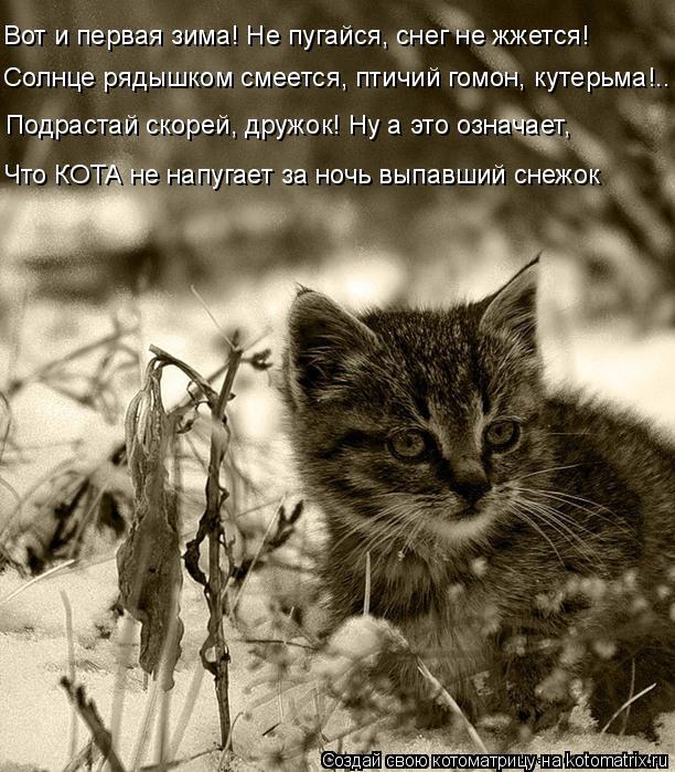 Котоматрица: Вот и первая зима! Не пугайся, снег не жжется! Солнце рядышком смеется, птичий гомон, кутерьма!.. Подрастай скорей, дружок! Ну а это означает, Ч