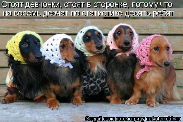 Котоматрица: Стоят девчонки, стоят в сторонке, потому что на восемь девчат по статистике девять ребят