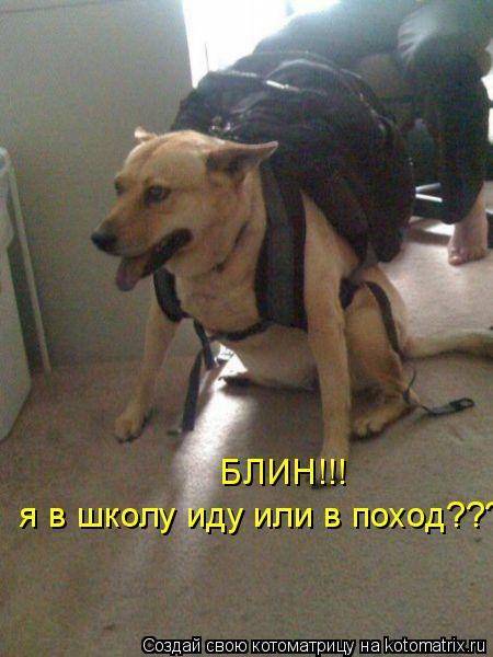 Котоматрица: я в школу иду или в поход???  БЛИН!!!