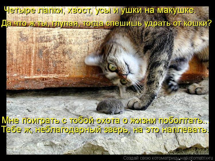 Котоматрица: Четыре лапки, хвост, усы и ушки на макушке.  Да что ж ты, глупая, тогда спешишь удрать от кошки? Тебе ж, неблагодарный зверь, на это наплевать.