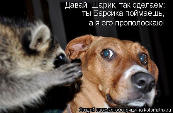 Котоматрица - Давай, Шарик, так сделаем: ты Барсика поймаешь, а я его прополоскаю!
