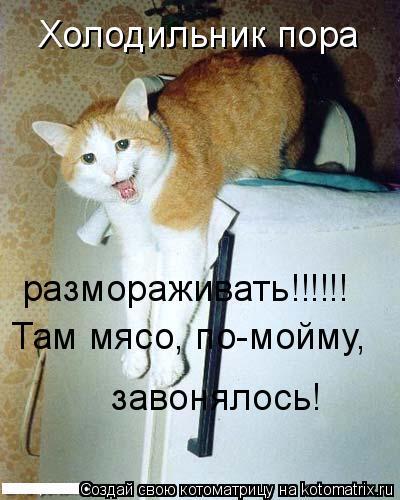 Котоматрица: Холодильник пора размораживать!!!!!! Там мясо, по-мойму, завонялось!