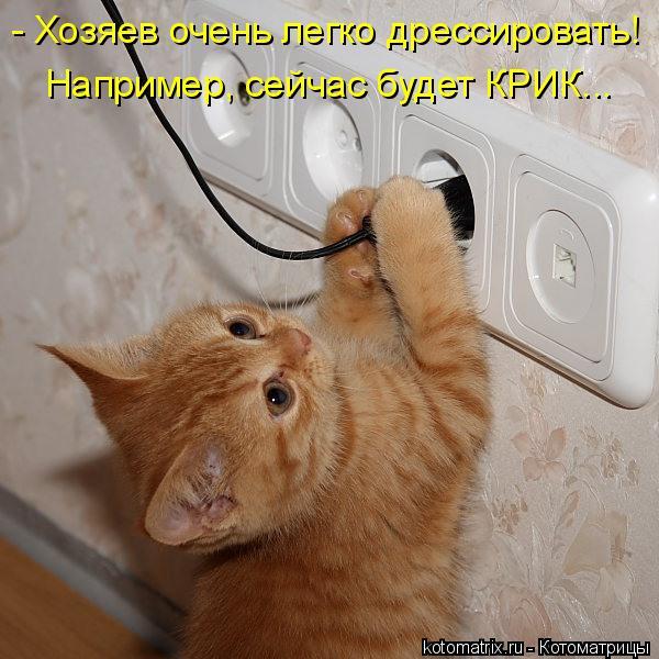 - Хозяев очень легко дрессировать! Например, сейчас будет КРИК...