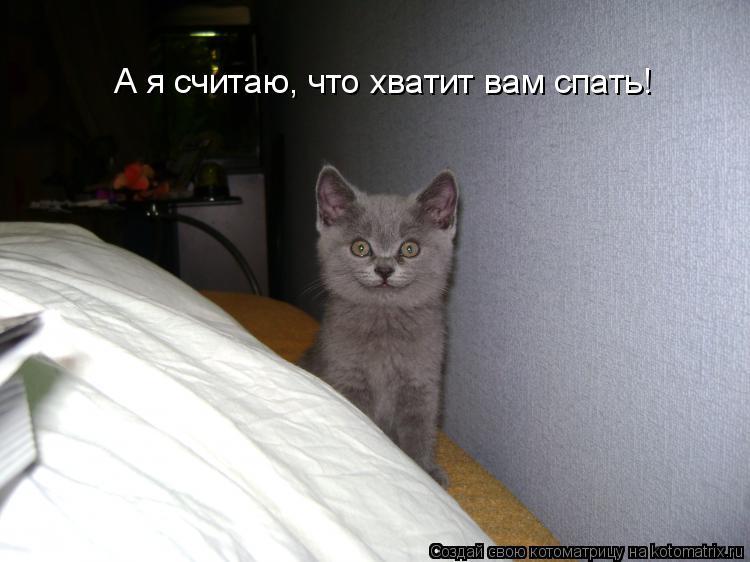 Котоматрица: А я считаю, что хватит вам спать!
