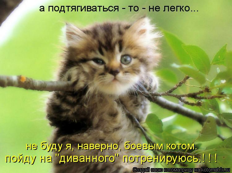 """Котоматрица: а подтягиваться - то - не легко... пойду на """"диванного"""" потренируюсь.! ! ! не буду я, наверно, боевым котом."""