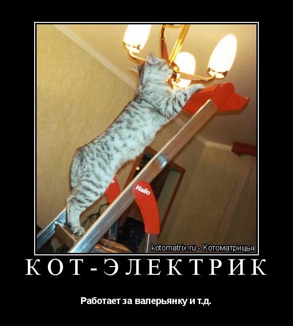Электрика коте