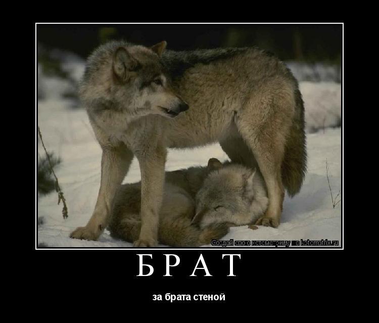 Славяне ли болгары  Военное обозрение