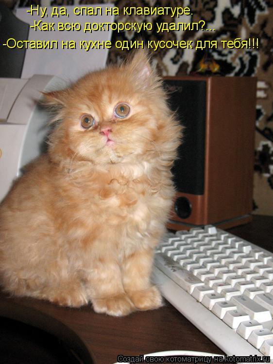 Котоматрица: -Ну, да, спал на клавиатуре. -Как всю докторскую удалил?... -Оставил на кухне один кусочек для тебя!!!