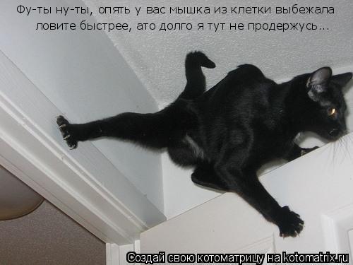 Котоматрица: Фу-ты ну-ты, опять у вас мышка из клетки выбежала ловите быстрее, ато долго я тут не продержусь...