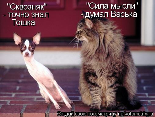 """Котоматрица: """"Сила мысли"""" - думал Васька """"Сквозняк"""" - точно знал Тошка"""