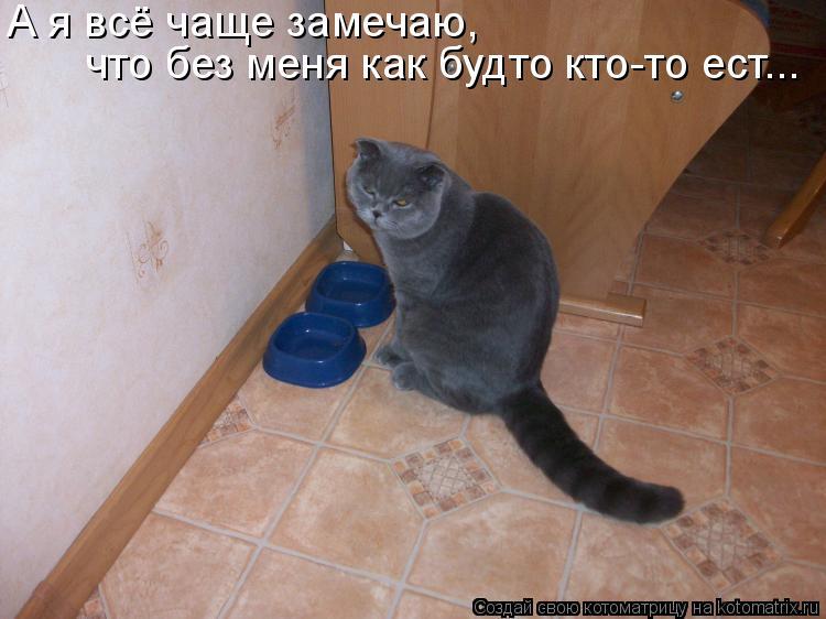 Котоматрица: А я всё чаще замечаю,  что без меня как будто кто-то ест...