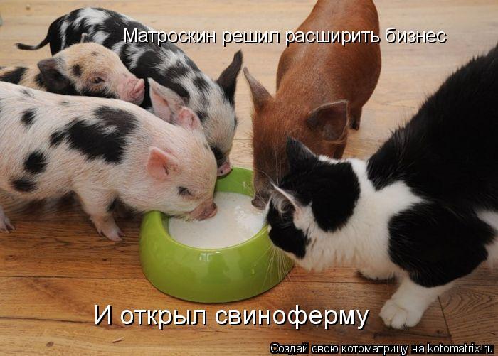 Котоматрица: Матроскин решил расширить бизнес И открыл свиноферму