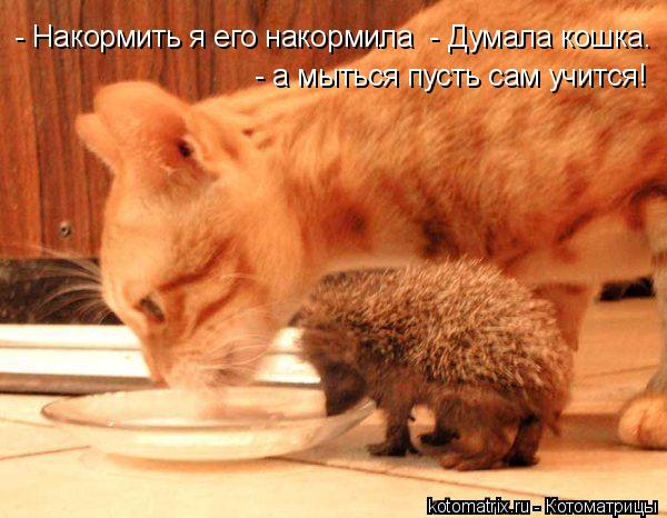 Котоматрица: - а мыться пусть сам учится! - Накормить я его накормила  - Думала кошка.