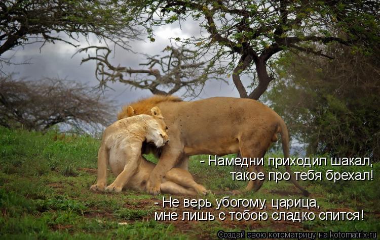 Котоматрица: - Намедни приходил шакал, такое про тебя брехал! - Не верь убогому, царица, мне лишь с тобою сладко спится!