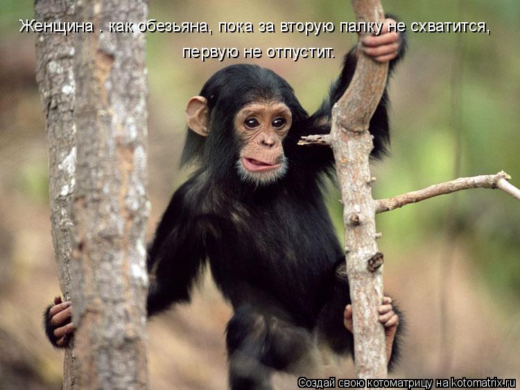 Котоматрица: Женщина — как обезьяна, пока за вторую палку не схватится,  первую не отпустит.