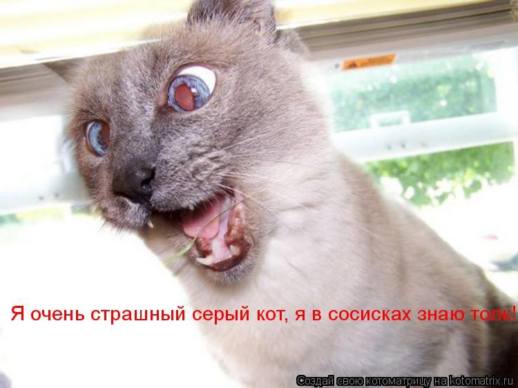 Котоматрица: Я очень страшный серый кот, я в сосисках знаю толк!