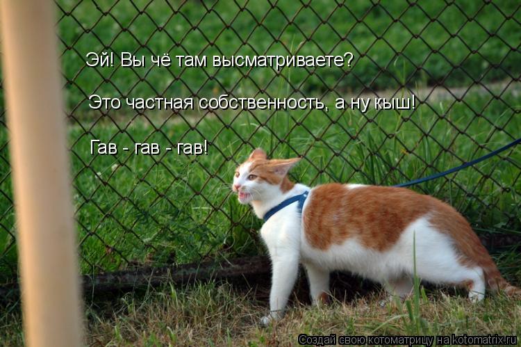 Котоматрица: Гав - гав - гав!  Эй! Вы чё там высматриваете? Это частная собственность, а ну кыш!