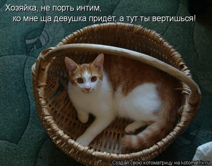 Котоматрица: Хозяйка, не порть интим,  ко мне ща девушка придёт, а тут ты вертишься!