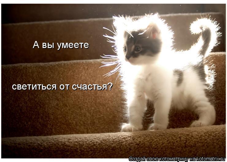 Котоматрица: А вы умеете  светиться от счастья?