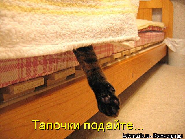 Котоматрица: Тапочки подайте...