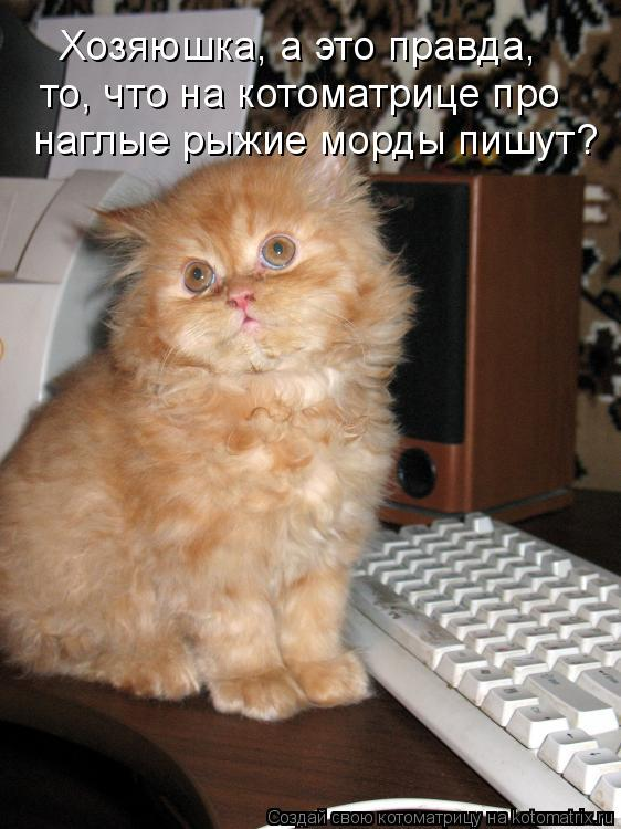 Котоматрица: Хозяюшка, а это правда,  то, что на котоматрице про наглые рыжие морды пишут?