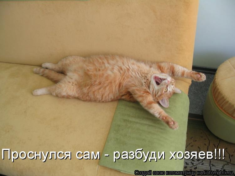 Котоматрица: Проснулся сам - разбуди хозяев!!!
