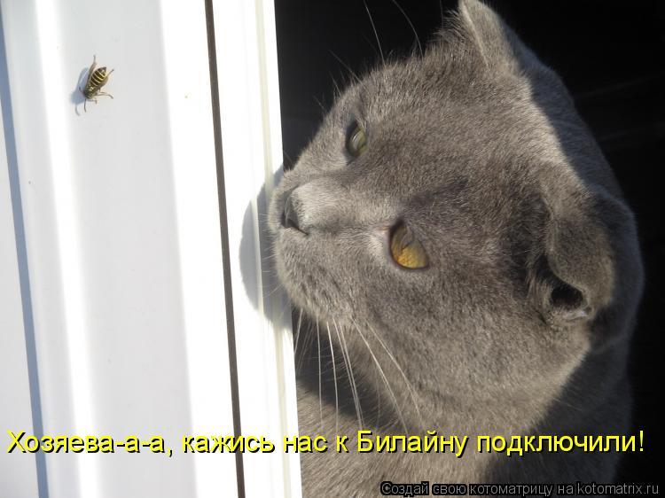 Котоматрица: Хозяева-а-а, кажись нас к Билайну подключили!