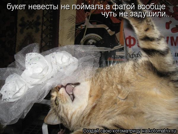 Котоматрица: букет невесты не поймала,а фатой вообще чуть не задушили...