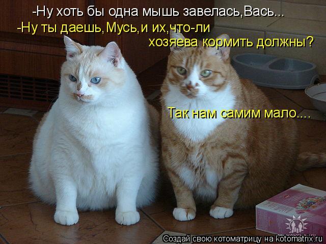 Котоматрица: -Ну хоть бы одна мышь завелась,Вась... -Ну ты даешь,Мусь,и их,что-ли  хозяева кормить должны? Так нам самим мало....