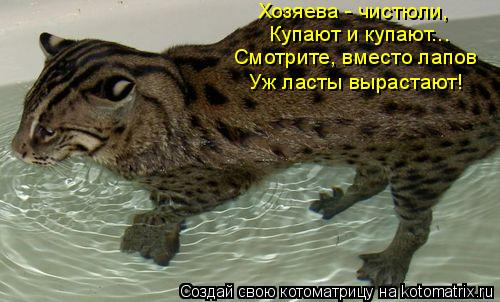 Котоматрица: Хозяева - чистюли, Купают и купают... Смотрите, вместо лапов Уж ласты вырастают!