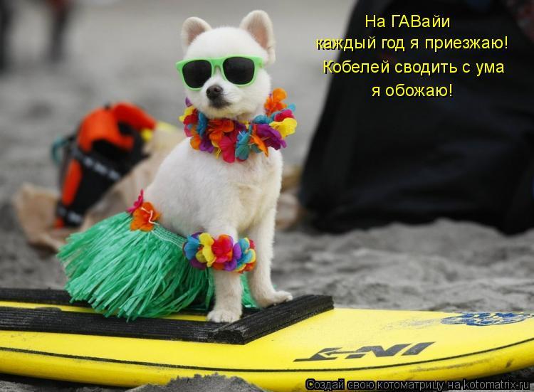 Котоматрица: На ГАВайи каждый год я приезжаю! Кобелей сводить с ума я обожаю!