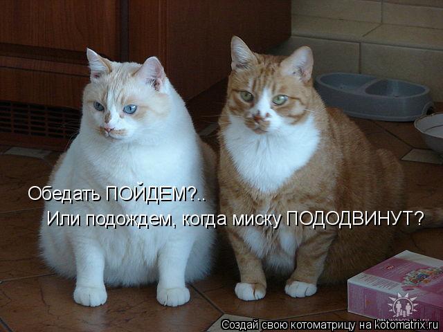 Котоматрица: Обедать ПОЙДЕМ?.. Или подождем, когда миску ПОДОДВИНУТ?