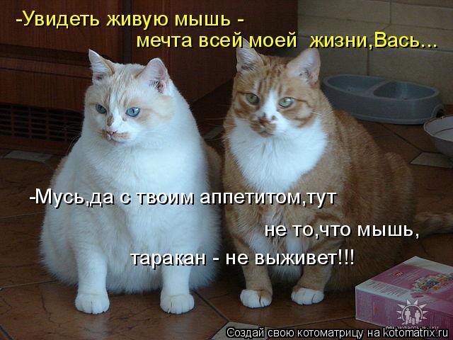 Котоматрица: -Увидеть живую мышь -  мечта всей моей  жизни,Вась... -Мусь,да с твоим аппетитом,тут  не то,что мышь, таракан - не выживет!!!