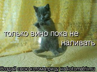 Котоматрица: только вино пока не  наливать