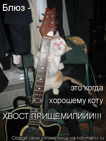 Котоматрица: Блюз - хорошему коту это когда ХВОСТ ПРИЩЕМИЛИИИ!!!