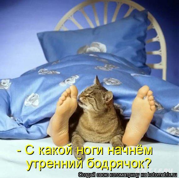 Котоматрица: - С какой ноги начнём  утренний бодрячок?