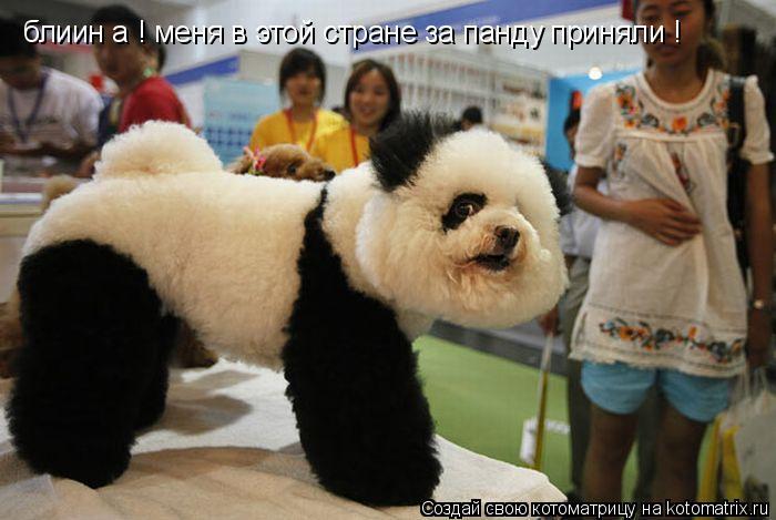 Котоматрица: блиин а ! меня в этой стране за панду приняли !